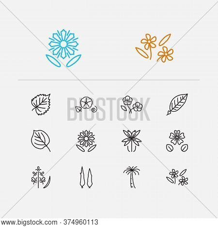 Flora Icons Set. Buttercup And Flora Icons With Linden, Natural And Cypress. Set Of Birch For Web Ap