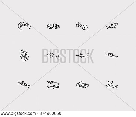 Aquatic Icons Set. Scad And Aquatic Icons With Marine Brush Fish, Flying Fish And Spiny Lobster. Set