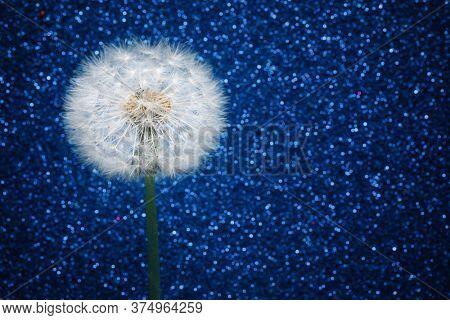 dandelion flower on blue glitter background