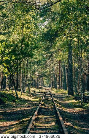 Empty narrow gauge railroad through the green pine forest at summer