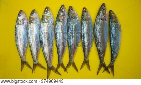 Fresh catch sardines fish in a chopping board ready for cooking