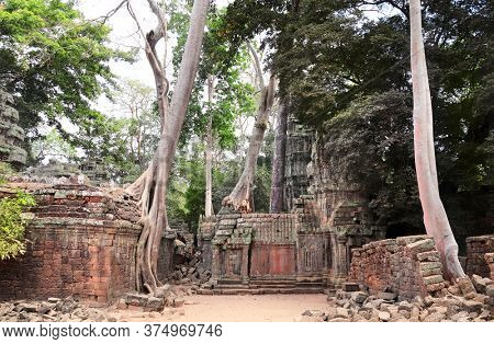Giant trees on ruins of Ta Prohm temple, khmer ancient complex Angkor Wat (Angkor Thom), Siem reap, Cambodia, Indochina. UNESCO world heritage Site
