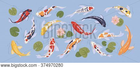 Set Of Japanese Colorful Koi Carp Fish In Decorative Japan Traditional Pond. Collection With Goldcar