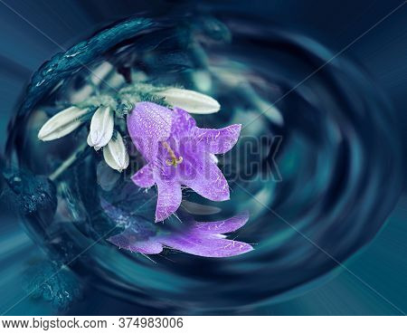 Purple Violet Shoot Of A Blue Flower. A Beautiful Purple Campanula Bloomed In The Garden. Isolated G