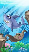 Shark and eagle ray with shipwreck - color illustration. poster