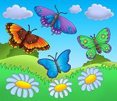 Four colorful butterflies on meadow - color illustration. poster