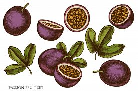 Vector Set Of Hand Drawn Colored Passion Fruit Stock Illustration