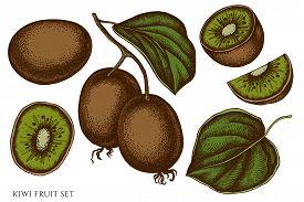 Vector Set Of Hand Drawn Colored Kiwi Fruit Stock Illustration
