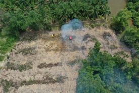 Deforest environmental problem. Logging of rain forest to clear land for palm oil plantations in Southeast Asia