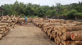 TAKUAPA, THAILAND - 01 JULY 2020: Logs piled up at sawmill. Trees from rainforest are cut down for lumber and timber industry