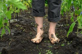 Watering The Garden. Dirty Male Legs Close-up. A Man Stands Barefoot On A Path In The Garden.