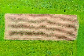 Plowed Field With Planting Potatoes Among Grassy Meadows Top Aerial View