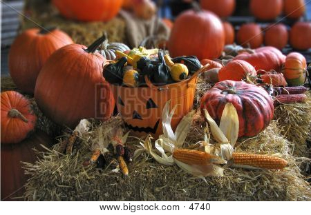 Jack-O-Lantern Harvest