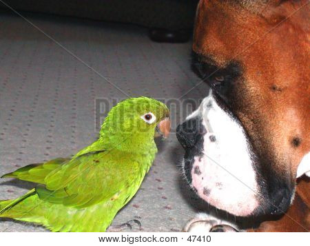 NOSE TO BEAK
