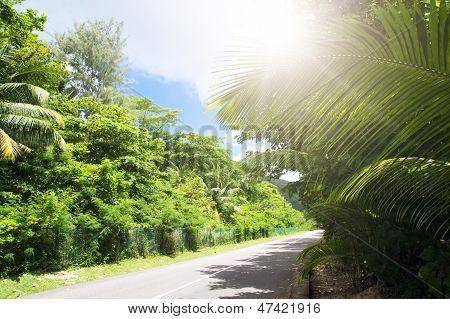 La Digue Island, Seyshelles. Road In Green Jungle.