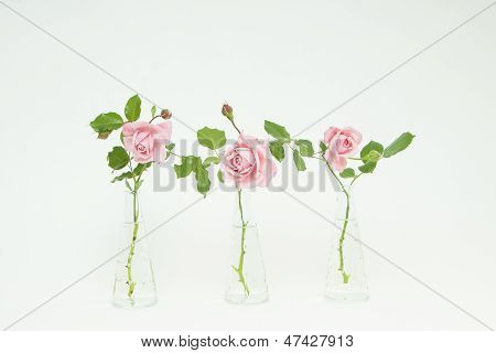 Stock Photo Of 3 Roses In Glass Vases
