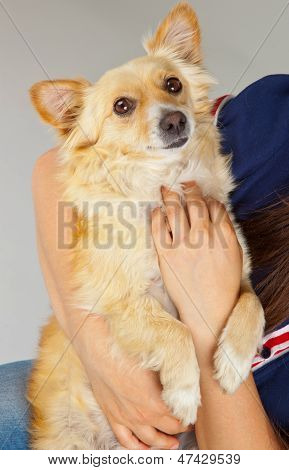 Spitz Dog In Her Arms