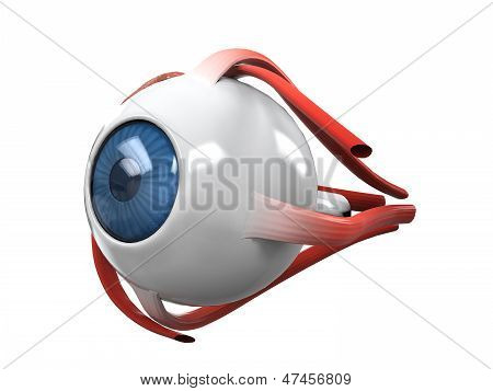 Human Eye Dissection Anatomy isolated on white background. 3D render poster