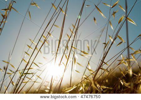 Summer grasses