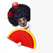 spanish flamenco dog with very big curly hair and hand fan behind banner placard poster