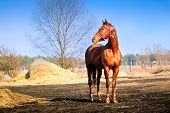 Strong and beautiful horse in the pasture bright sunny spring day and the blue sky poster