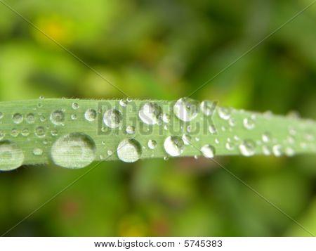 Blade Of Grass  Water