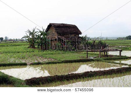 Terai landscape in Nepal