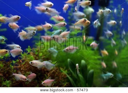 Tankfull Of Fish...