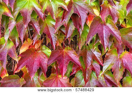 Red leaf on brick wall