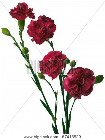 Bouquet Of Four Red Carnation Flowers