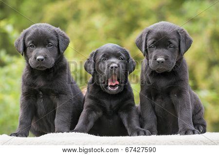 Cute Dog Puppies