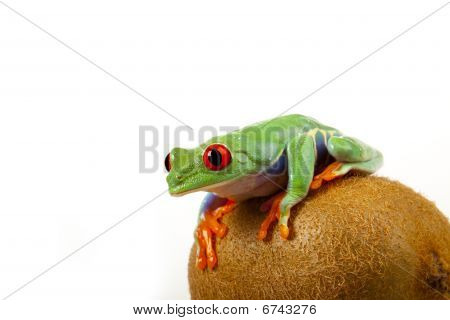 Kiwi Frog