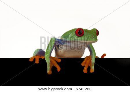 Board Frog!