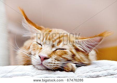 Kitten on scratching post