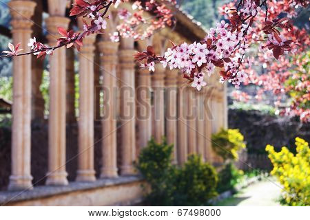 Blossoms and Medieval Cloister
