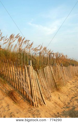 Dune with Fences