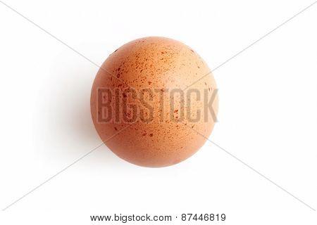 Fresh Hens Egg