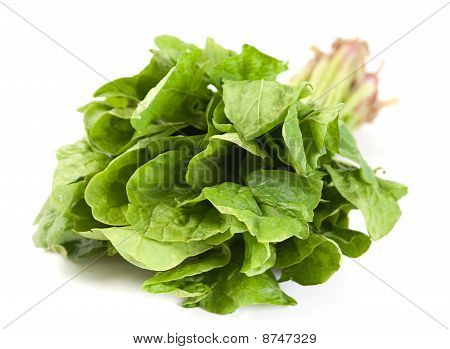 Spinach Fresh Herb