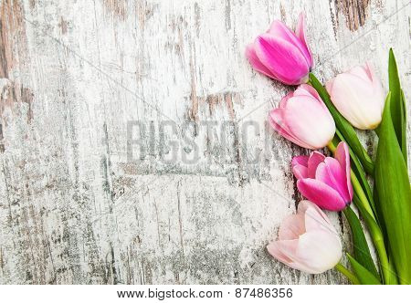 Border With Pink Tulips