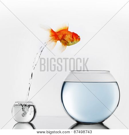 Gold fish jumping out of small to big fishbowl