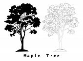 Maple Tree with Leaves and Grass Black Silhouette, Contours and Inscriptions Isolated on White Background. Vector poster