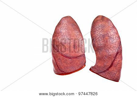 Two Human Model Lungs Isolated On White Background