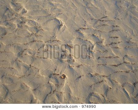 Wet Sea Sand