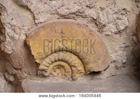 Historical remnants of an old shell of twenty thousand,