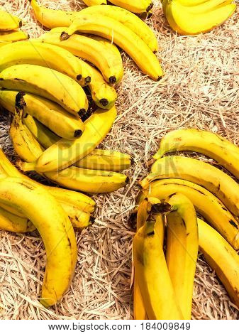Pile of fresh organic yellow bananas on a market close up