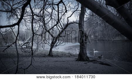 a view of ducks in a lake in St james's Park London
