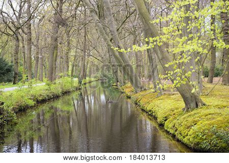 Overview of a Canal through a Forest with Beech Trees (Fagus sylvatica) at the Waterfront in Country Estate Oosterbeek Wassenaar the Netherlands