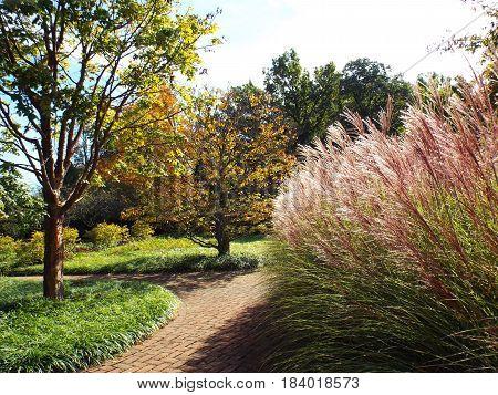 Tall ornamental maiden grass at a park.
