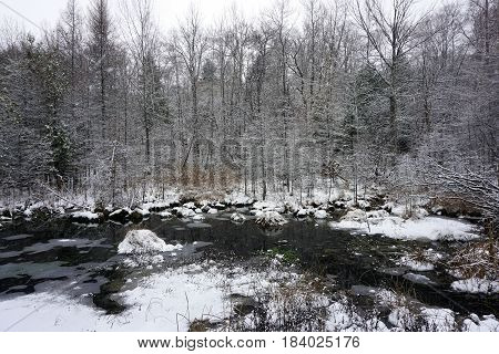 Fresh snow and ice on the West Fourth Street Swamp in Harbor Springs, Michigan, during a November snowstorm.