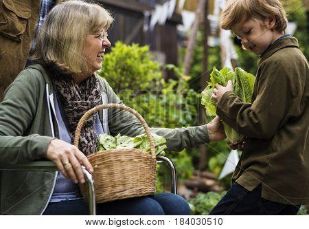 Senior couple with boy planting vegetables at garden backyard